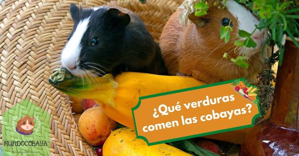 Lista de verduras para cobayas